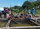 Indah Kiat Bantu Peternak Budidaya Ikan Lele di Serpong