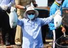 Menteri Edhy Prabowo Mengajak Masyarakat Lebaran Ikan