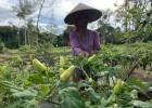 Upaya Mengurangi Laju Deforestasi di Pedalaman