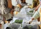 Kenalkan Wisata Edukasi Tanaman Aromatik Khas Indonesia Via Facebook